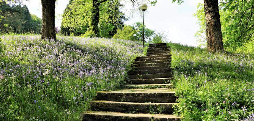 Career Steps - stairway