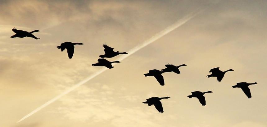 Target Groups - migratory birds